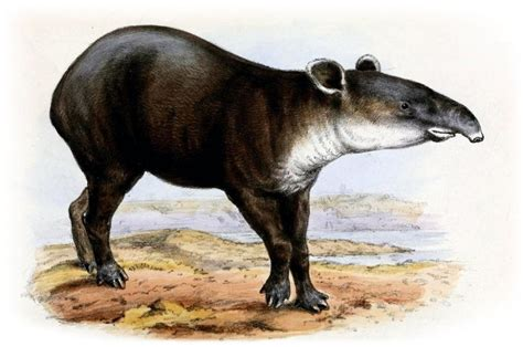 Hot, nasty tapir action too much for Facebook (Update