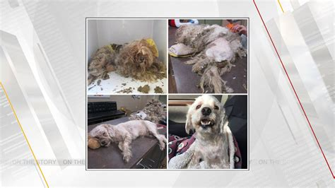 MWC Animal Welfare, Local Rescue Save Dog With A Little